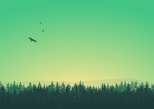 Sky Trees Silhouette Background Green