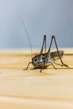 Vertical Shot Of Grasshopper In Nature