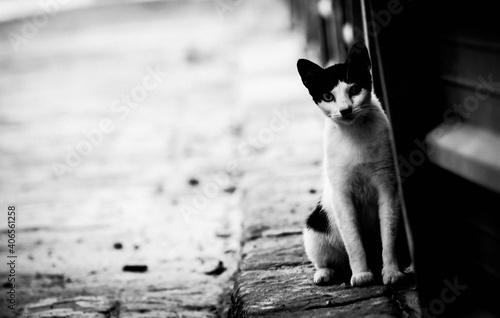 Photo gato callejero