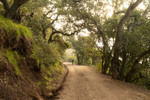 Oak And Bay Trees Line A Hiking Path On A Side Of A Hill Under Heavy Overcast Sky, Waterdog Lake, Belmont, California