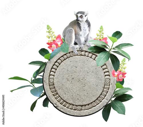 Fototapeta premium Ringtailed lemur, old stone, flower and leaves of tropical plant