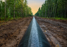 Crude Oil And Natural Gas Pipeline Construction Work In Forest Area.  Petrochemical Pipe On Top Of Wooden Supports. Installation And Construction The Pipeline For Transport Gas To LNG Plant