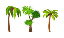 Palm Growth Plants With Frond Leaves On Top Of Unbranched Stem Vector Set