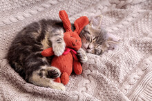 Baby Cat Sleeps On Cozy Blanket Hugs A Toy. Fluffy Tabby Kitten Snoozing Comfortably With Plush Rabbit Hare On Knitted Bed. Copy Space