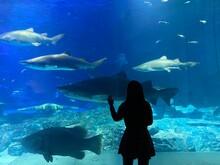 Beautiful Korean Girl Watching A Shark