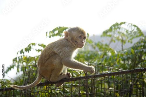 Photo monkey on the tree