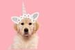 Leinwandbild Motiv Portrait of a cute golden retriever puppy looking at the camera on a pink background wearing a unicorn diadem