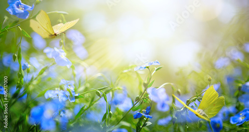 art abstract spring background with fresh flowers and flying butterflies - fototapety na wymiar