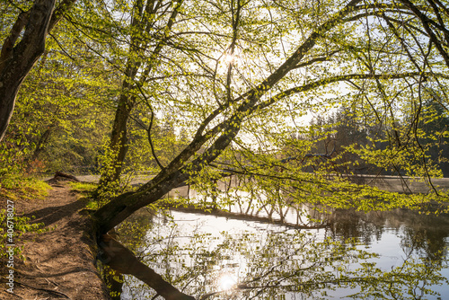 Tableau sur Toile Tree growing diagonally on the bank of a lake