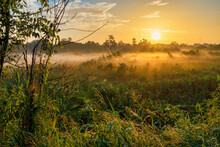Sunrise At Circle-B-Bar Reserve Near Lakeland, Florida.  A Foggy, Misty Morning.