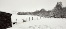 Heavy Snow Covers Paddocks And A Single Sheep On The Moorland Smallholding After Daylong Snowfall In Nidderdale