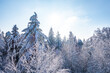 Zima śnieg las drzewa kaszuby wieżyca