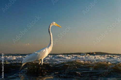 Photo Ave blanca a la orilla del mar al atardecer