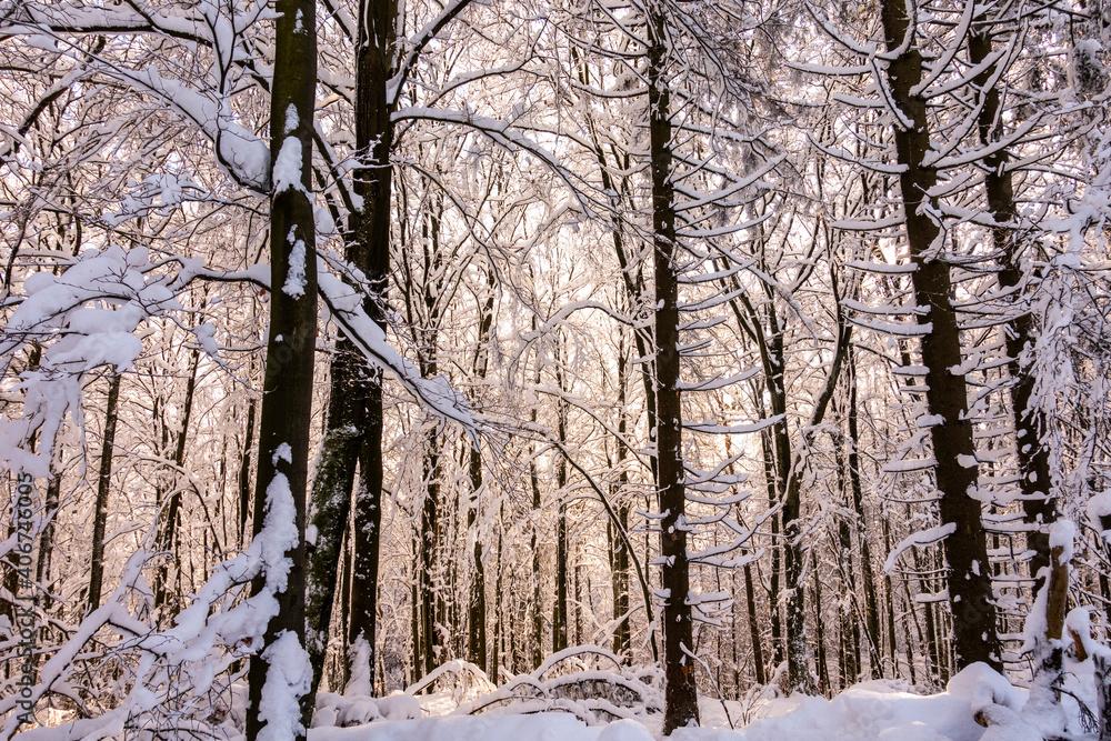 Fototapeta Zima śnieg las drzewa kaszuby wieżyca