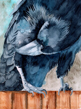 Watercolor Illustration Of A Black Raven Sitting On A Brown Wooden Fence And Preening Its Feathers