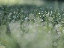Silver Dew On The Grass