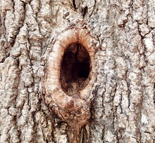 Tree Knot Close-Up