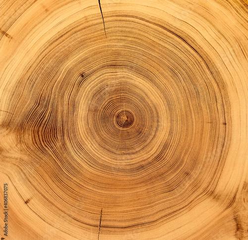 Fototapeta Tree Rings End Grain Background  obraz