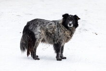 Big Stray Dog In Winter On A Snowy Street. Portrait Of Uncared Stray Dog On Snow In Winter.