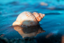 Seashell Washed Up On The Shores Of The Sea