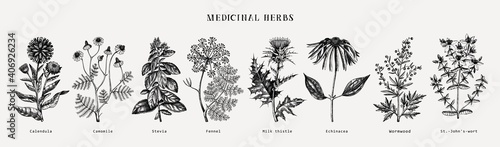 Fototapeta Medicinal herbs collection. Vector set of hand drawn summer herbs, wild flowers, weeds and meadows. Vintage aromatic plants illustrations. Herbal tea ingredients.Botanical elements in engraved style. obraz