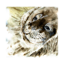 Watercolor  Close Up Portrait Of Positive And Funny  Relaxing Sea Lion