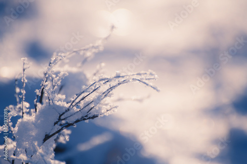 Matowe rośliny na leśnej łące o zachodzie słońca. Zdjęcia makro, płytka głębia ostrości. Piękne zimowe tło natura