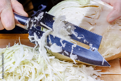 Fototapeta Woman chopping head of fresh white cabbage by stainless steel knife obraz