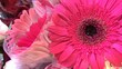 canvas print picture - closeup view of gerbera daisy flowers