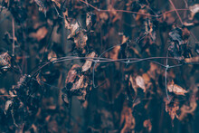 Moody Dark Art Floral Photo With Little Dried Leaves Of On Dark Dry Brown Background, Winter Backdrop, Close Up, Defocused, Soft Focus On Foreground