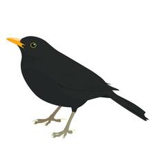 Blackbird Vector, Flat Graphic Bird