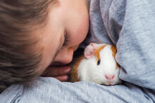 A Boy With His Guinea Pig. A Boy Hugs A Guinea Pig. A Child Plays With The Pet At Home. Pet Care