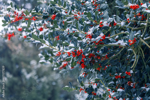 Foto Red berries and green holly