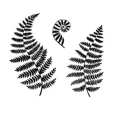 Fern Silhouettes Isolated On A White Backgroubd. Vector.