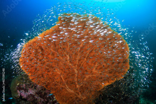 Beautiful, delicate sea fans and soft corals on a tropical reef