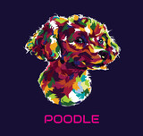 vector illustration of a poodle head in the style of pop art