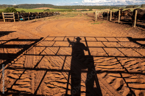shadow of an aberdeen angus rancher and livestock in the background Fototapeta