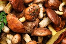 Fresh Wild Slippery Jack Mushrooms As Background, Top View