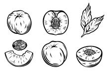 Set Of Peaches, Monochrome, Vector