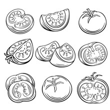 Hand Drawn Tomato Set.
