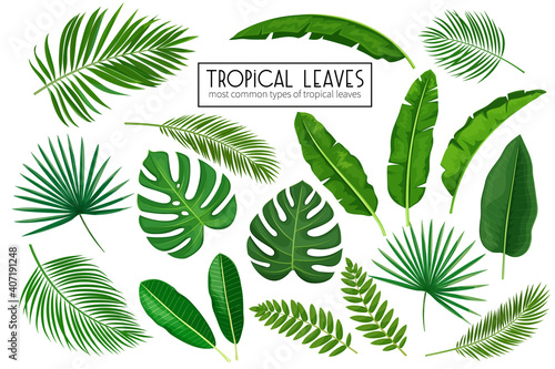 Fotografie, Obraz set tropical leaves