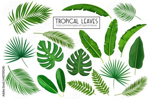 set tropical leaves - fototapety na wymiar