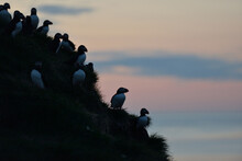Puffin Rock On Southern Coast Of Iceland