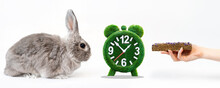 Power Mode. A Decorative Gray Rabbit, A Grass Alarm Clock, And A Woman's Hand With A Dry Pellet. White Background. Banner. The Concept Of Pet Care