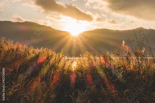 Slika na platnu すすきの間から見える太陽の光