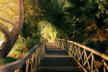 Paseo De Madera En Medio Del Bosque Rodeado De árboles Bajo La Luz Del Sol Al Atardecer.