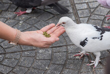 A Person Is Feeding A Pigeon On The Pavement