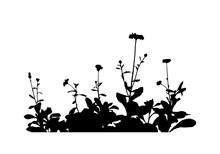 Pot Marigold (Calendula Officinalis) Silhouette Isolated On White Background