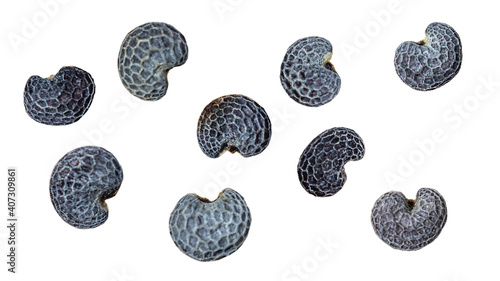 Obraz poppy seeds are isolated on a white background. Close-up - fototapety do salonu