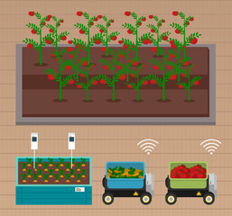 Smart farming, gardening or agriculture. Seedlings planting to garden bed on smart farming. Growing tomatoes and carrots using modern technology, use of greenhouses. Level neat tomato bushes beds
